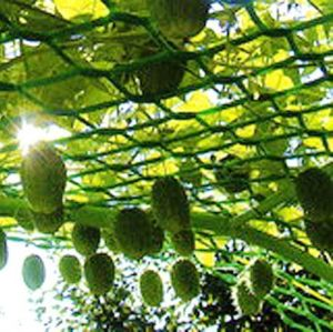 Садовая решетка, ячейка 24*24 мм