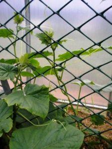 Заборная решетка, ячейка 70*58 мм