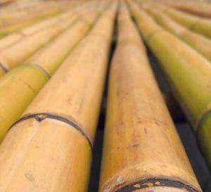 Бамбуковая опора 150 см