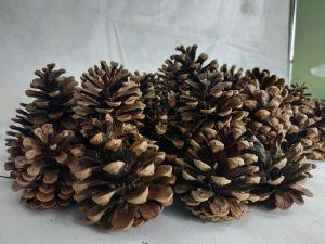 Декоративные сосновые шишки 10 шт