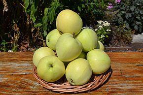 Яблоня в контейнере Папировка, 150-210 см