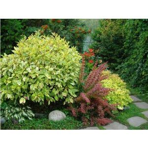 Удобрение для хвойников и декоративных кустарников Агроном Профи
