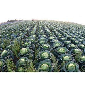 Удобрение для капусты Агроном Профи