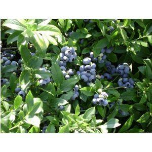 Удобрение для плодовых и ягодных кустарников Агроном Профи
