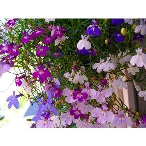 Удобрение для цветущих растений Агроном Профи