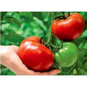 Удобрение для томатов и перца Агроном Профи