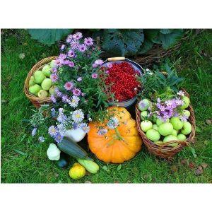 Удобрение универсальное для сада и огорода Агроном Профи
