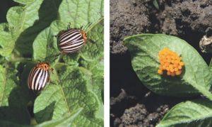 Битоксибацилин для защиты растений от вредителей (жуков, клещей) 500 мл