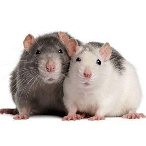 Гранулы от крыс и мышей BROS