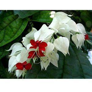 Грунт Домосад для цветущих растений