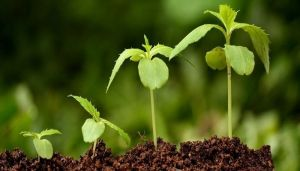 Энерген Ультра, природный стимулятор роста 10 мл
