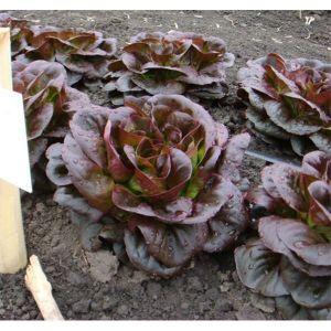Салат Феерия цвета смесь