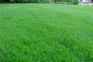 Газонная трава Теневыносливая 0,8 кг