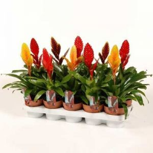 Удобрение Чистый Лист для комнатных растений, 20 г