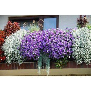 Цветы для балкона купить где заказать пиво букет чувашии в москве