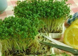 Кресс-салат Пикантный 1 г