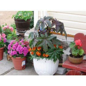 Подставка под Цветы Круг 35