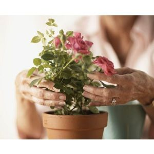 Грунт Квитка для роз (2,5 литра)