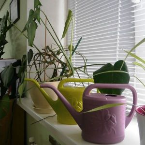 Лейка для комнатных растений Цветок оливковая