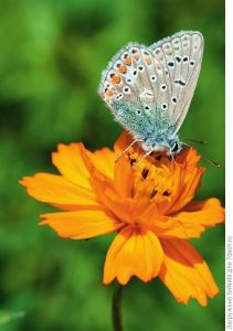Газонная трава Луговые бабочки, 30 г