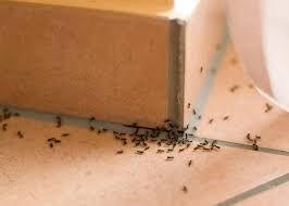 Мурацид от домашних и садовых муравьев 40 г