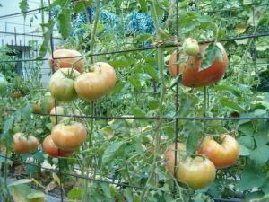 Подвязки для растений тканевые 100 шт