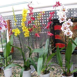 Опора для растений металлическая 60 см