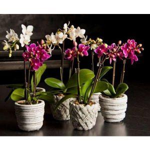 Опора для цветов Орхидея двойная