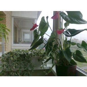 Опора для цветов Роза
