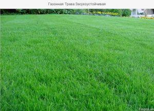 Органическое удобрение Джерело для газонной травы 500 мл