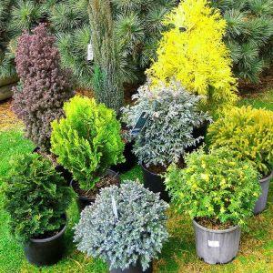 Органическое удобрение Джерело для хвойных растений 500 мл