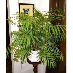 Грунт Квитка для пальмы (2,5 литра)