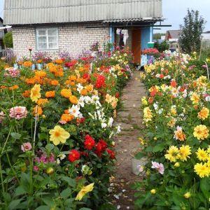 Поддержка для растений Заборчик Павлин