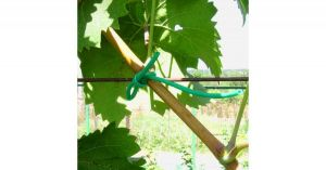 Подвязка для растений ПВХ 5 м