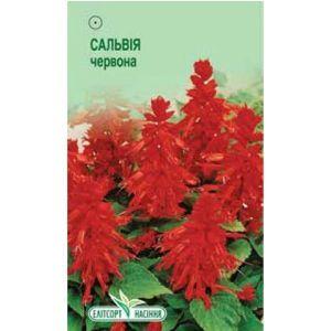 Шалфей блестящий красный