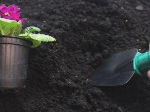 Совок садовый Truper (15 см)