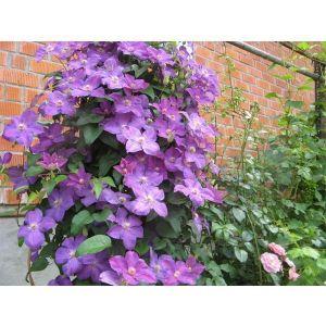 Шпалера для цветов Прованс
