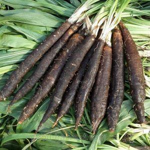 Скорцонера Дуплекс черный корень 0,5 г
