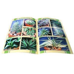 Книга Сукулентні рослини (книга 2)