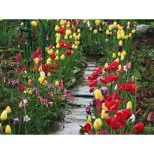 Тюльпаны махровые микс
