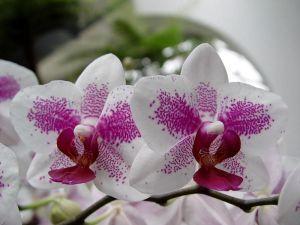 Удобрение Чистый Лист в палочках для орхидей, 60шт