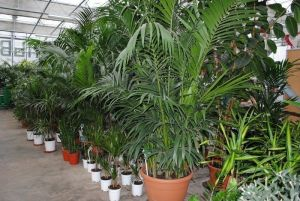 Удобрение Master (Мастер) для Декоративно-лиственных растений 25 г