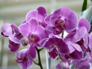 Удобрение Master (Мастер) для Орхидей 25 г