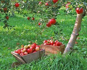 Удобрение Master (Мастер) для Плодово-ягодных культур 25 г
