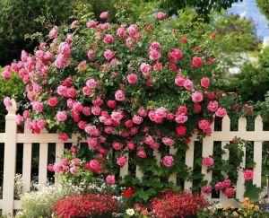 Удобрение Master (Мастер) для Роз и цветущих 25 г