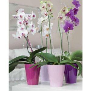 Горшок Вулкано-Орхидея, фисташковый
