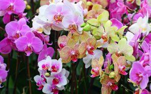 Удобрение Чистый Лист в палочках для орхидей