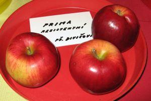 Яблоня Прима осенняя