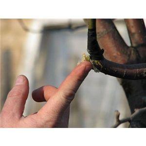 Садовый вар Защитник 220 грамм