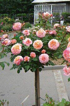 Купить штамб для розы подарок жене на 2 года свадьбы